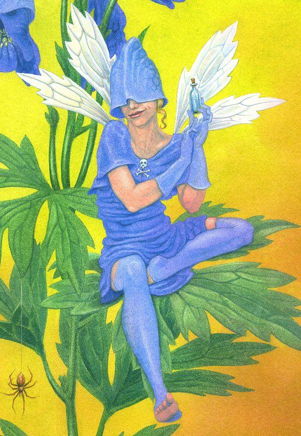 The Monkshood Fairy - close-up