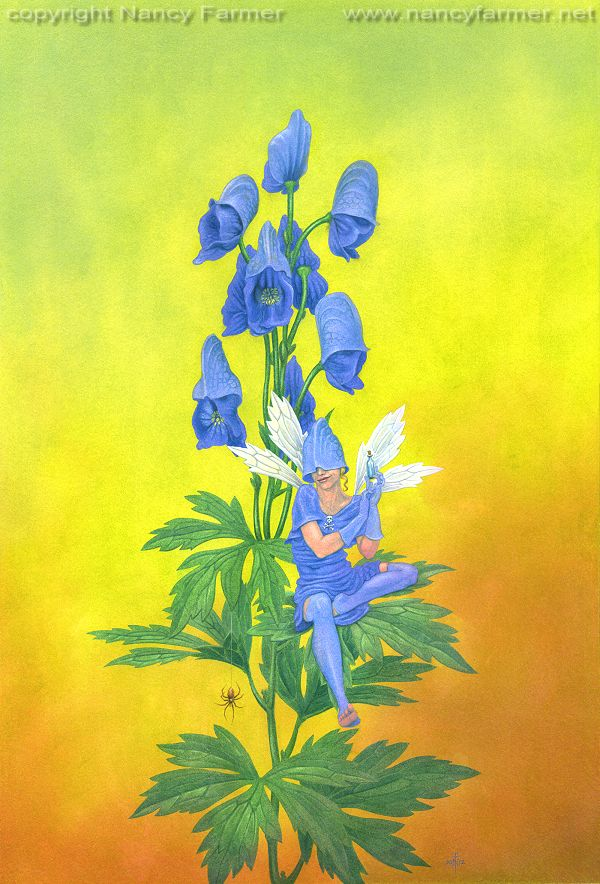 Aconitum Napellus, the Monkshood Fairy