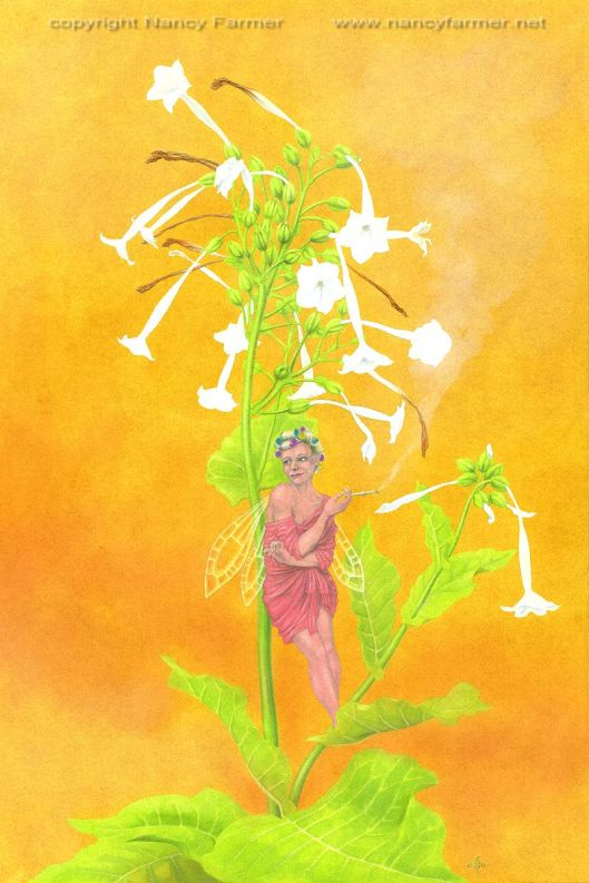 Nicotiana the Tobacco Plant Fairy