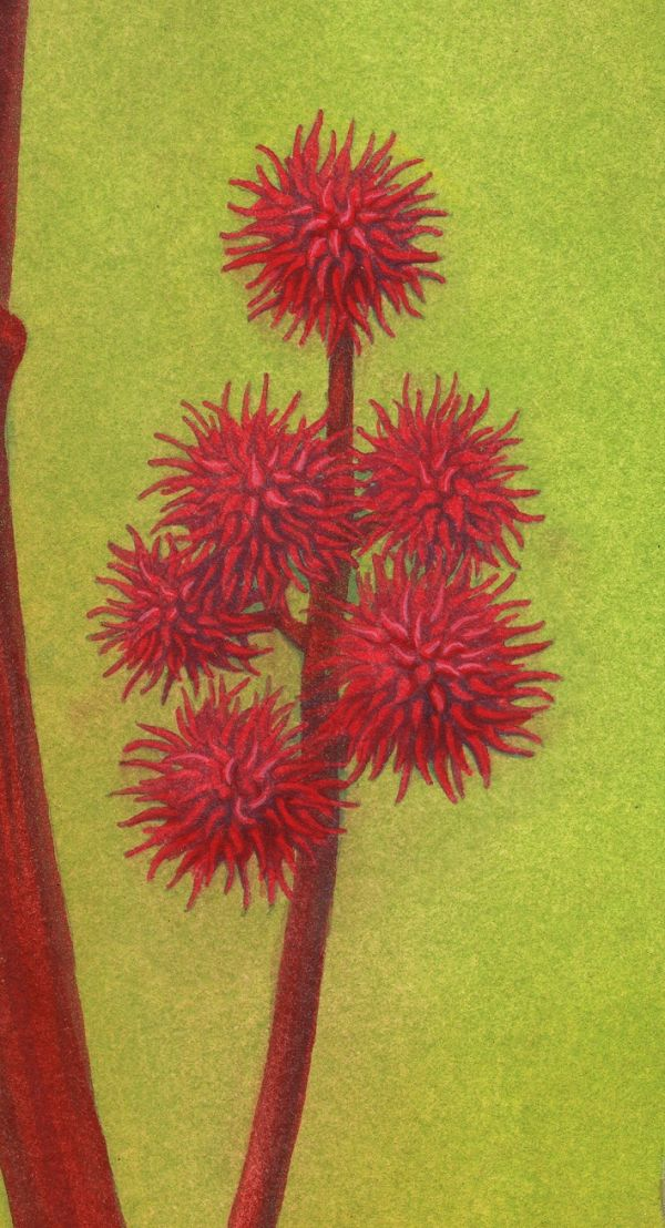 And the wonderful, bright red spiky seed pods!