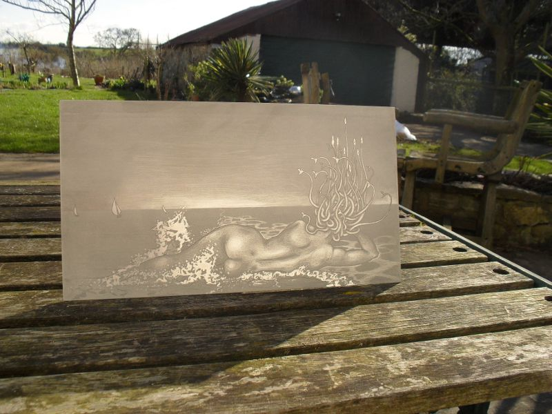 Aluminium plate, and my garden!