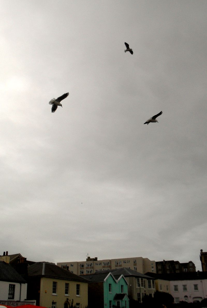Circling seagulls on Clevedon seafront