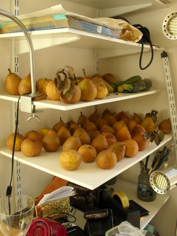 shelf of pears