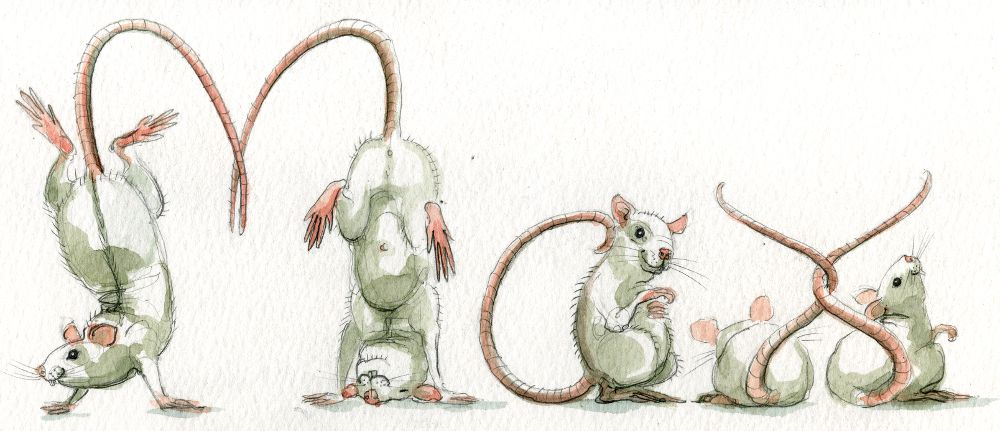 Spelling Animals: Rats
