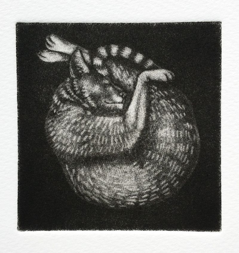 The finished mezzotint print