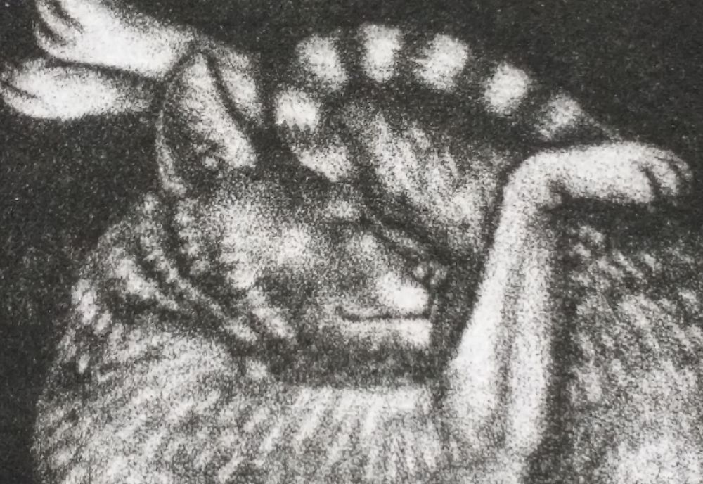 Detail of the finished mezzotint