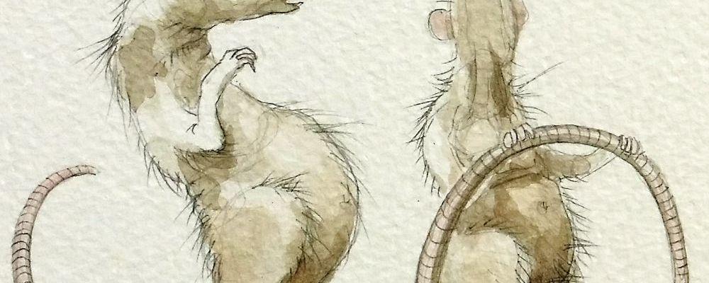 Skanky Rats