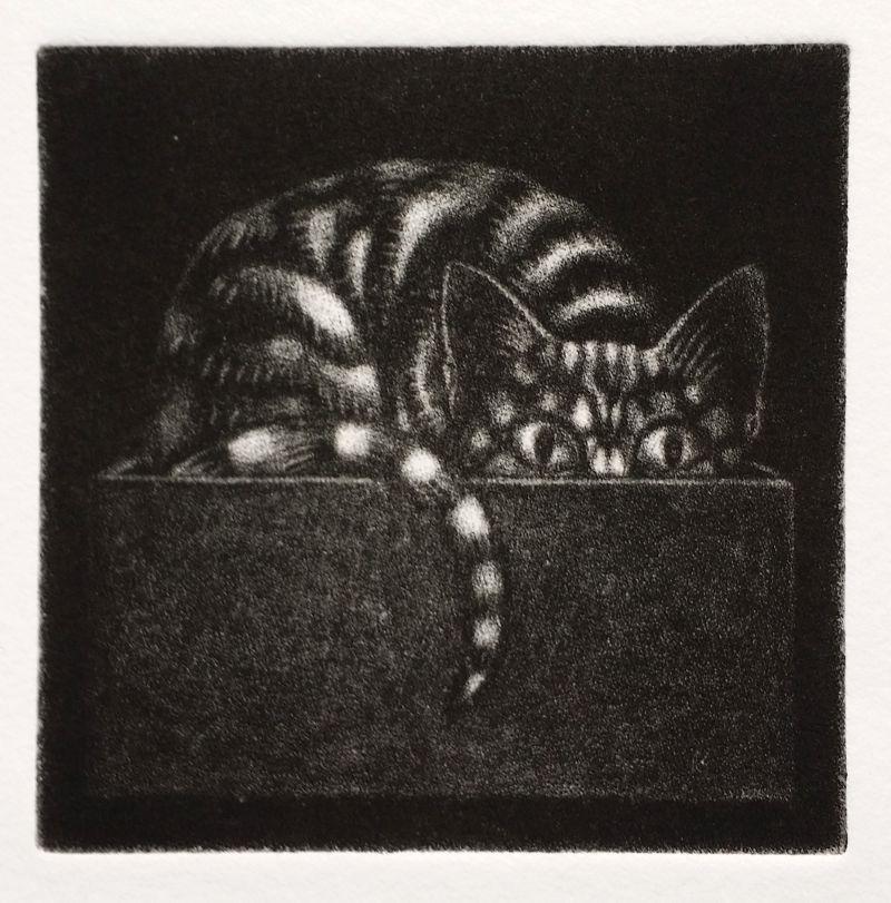 Mezzotint: 'Cat-in-the-Box'