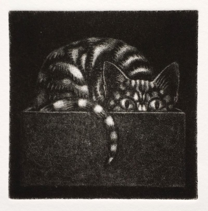 Mezzotint: 'Cat-in-the-Box'