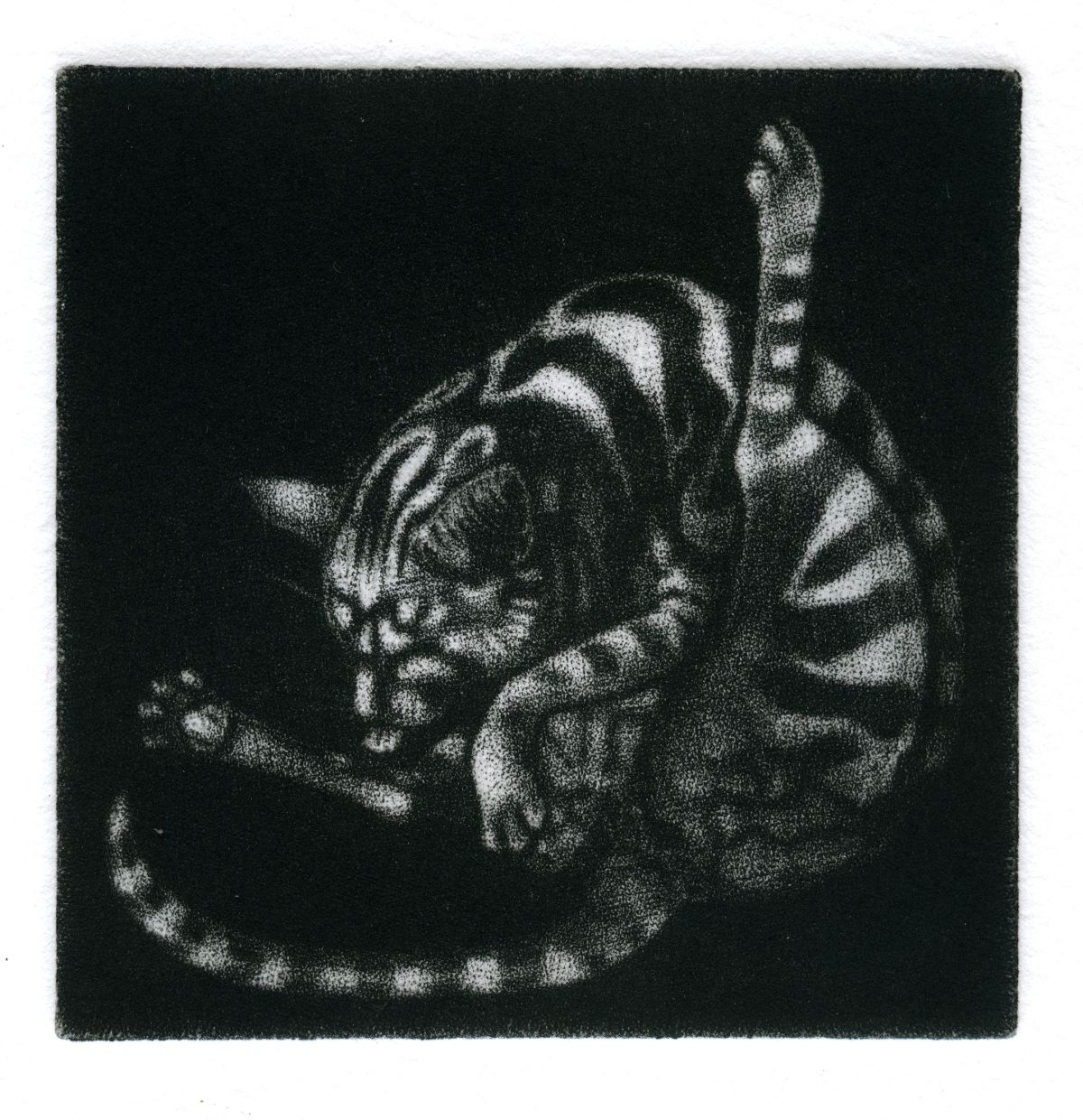 Stripy cat washing