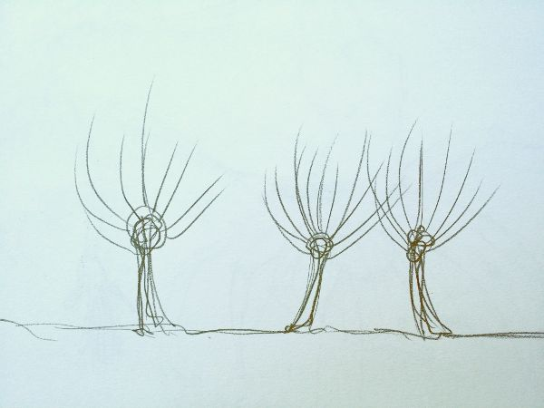 sketch: Pollarded willows