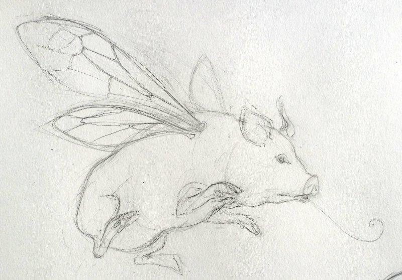 Flying Pig 1