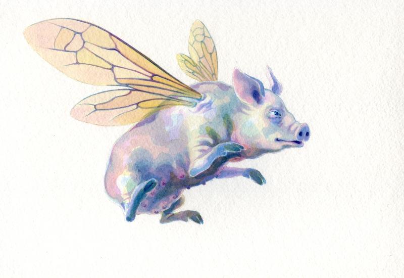 Hilda Pig
