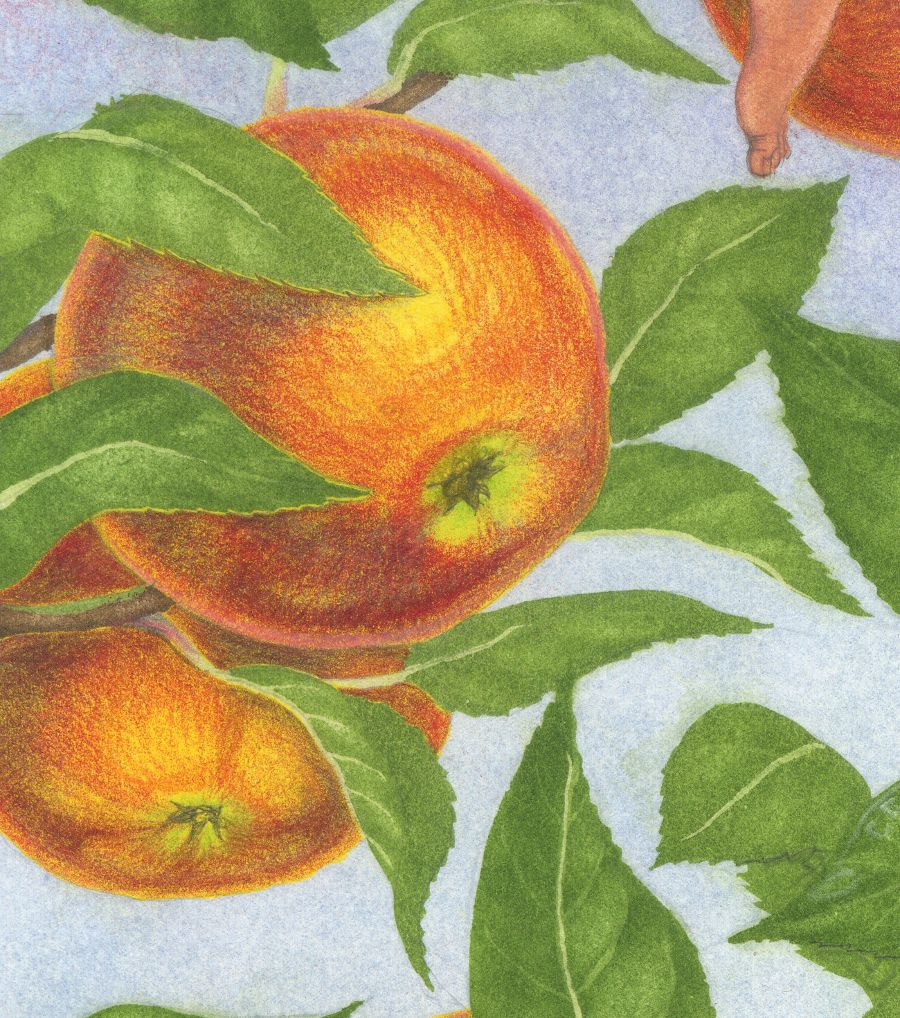 Detail of the apples. These were yellow gouache to give them warmth and shine, and then the red and other colours are added in pencils