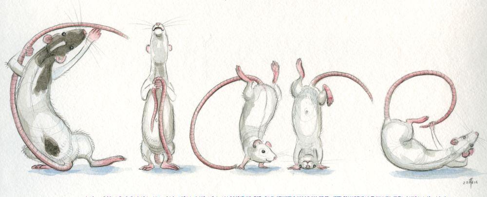 rats_clare_web