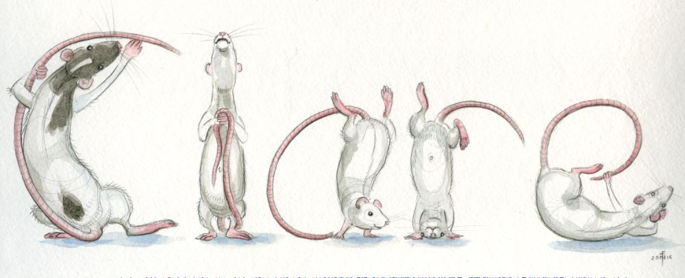 Spelling Rats - Clare