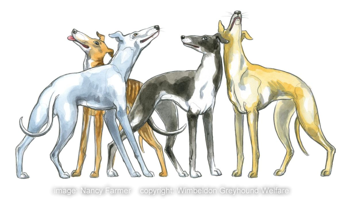 Coloured illustration from logo for Wimbeldon Greyhound Welfare