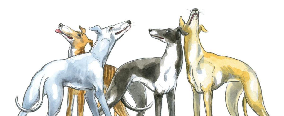 wimbeldon-greyhounds_web_crop