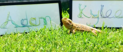 Framed pictures with lizard